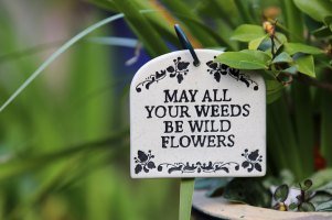 "Potted plant with words ""May all your weeds be wild flowers"""